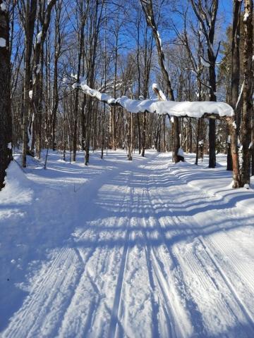 Osceola Ski & Sport Resort: Trail View